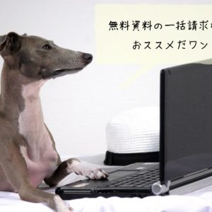 犬に関する資格を取るなら無料資料請求を活用すべき