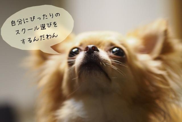 犬関連の知識・技術が学べるスクールの選び方