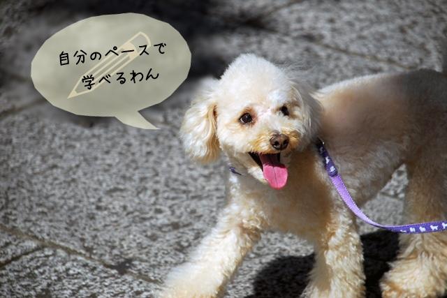犬関連の資格なら通信講座が最適そのメリットとは