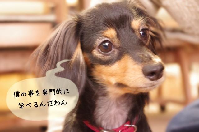 犬関連の専門学校の特徴と進学するメリット