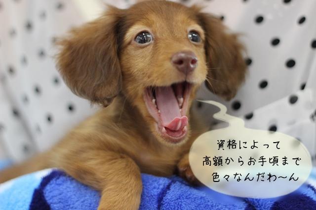犬関連の必要な資格を取得するまでの期間や費用