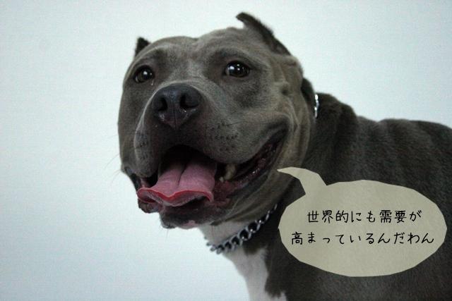 犬関連の資格や経験は将来必ず役に立つ