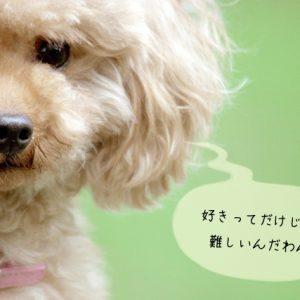 犬関連の仕事に向いている人の4つのポイント