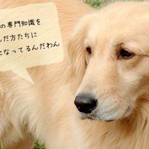 犬関連の仕事に就くにはどんな勉強と期間が必要か